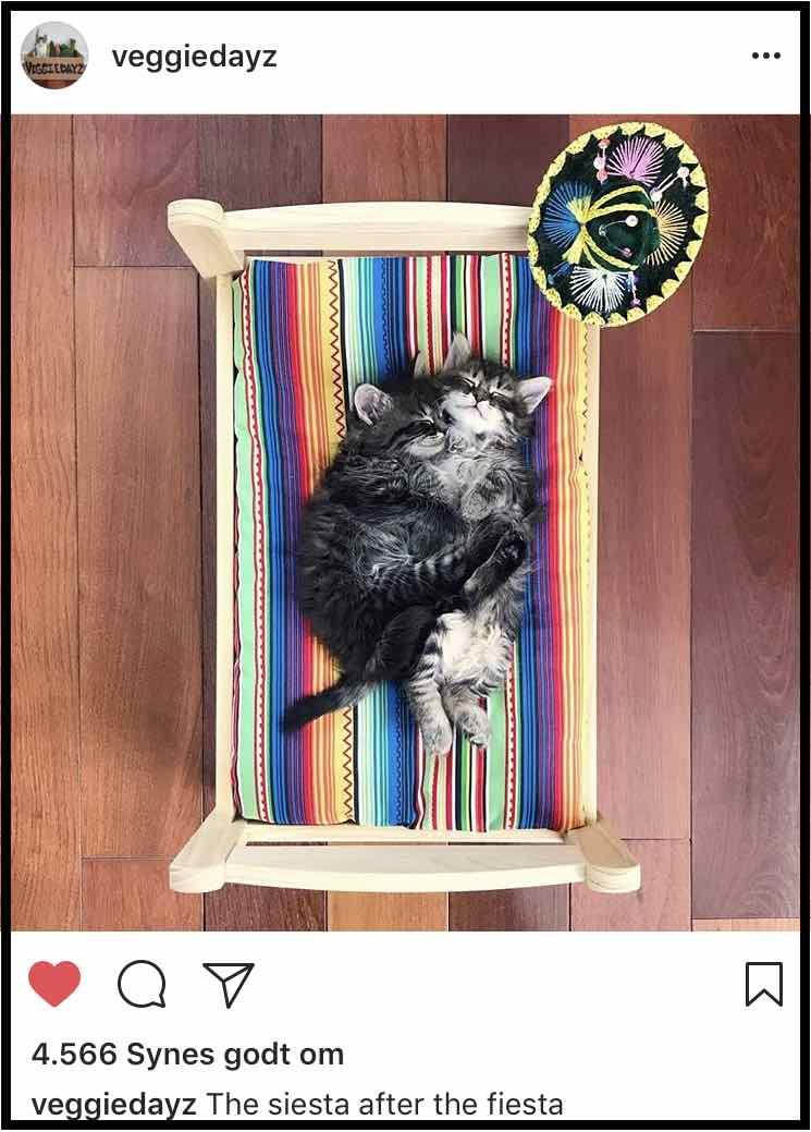 Veggiedayz profil på Instagram. Nyttede kattekillinger, der får den bedste start på livet hos Serena.